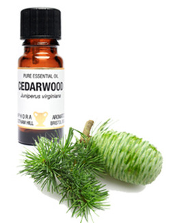 Amphora Aromatics Cedarwood Essential Oil 10ml