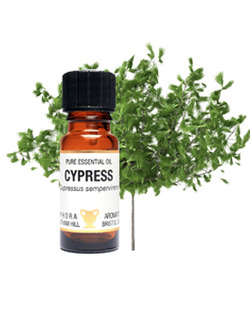 Amphora Aromatics Cypress Essential Oil 10ml