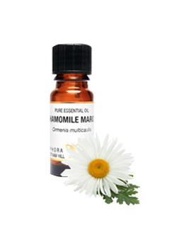 Amphora Aromatics Chamomile Maroc Essential Oil 10ml